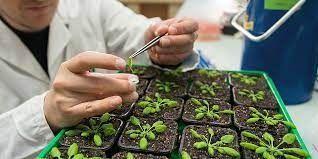 Les scientifiques ont créé une plante qui ne peut pas mourir !